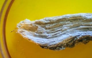 Amphibole silicate mineral that commonly found in metamorphic rocks